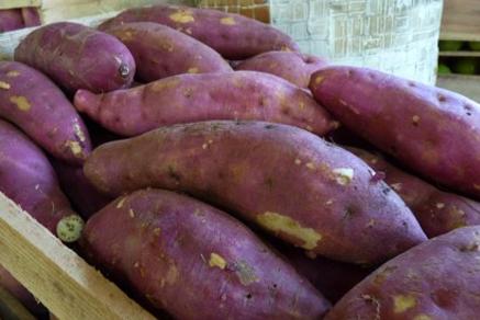 Batata doce rosada contribui para aumento de massa corporal